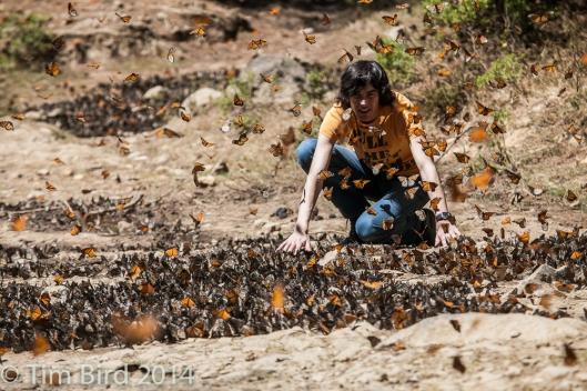 butterflies-4453